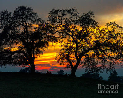 Art Print featuring the photograph Oaks And Sunset by Terry Garvin