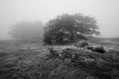 Photograph - Oaks In The Clouds II by Alexander Kunz