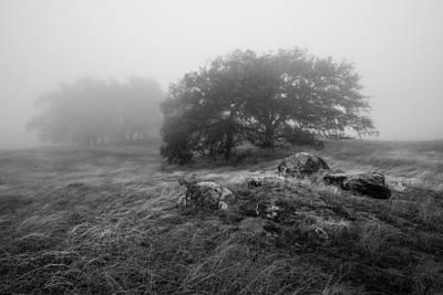 Photograph - Oaks In The Clouds II by Alexander Kunz