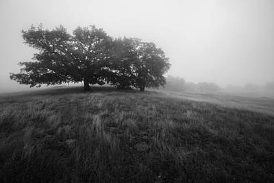 Photograph - Oaks In The Clouds IIi by Alexander Kunz