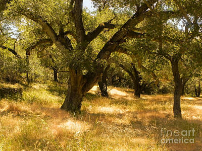 Photograph - Oaks by Patricia  Tierney