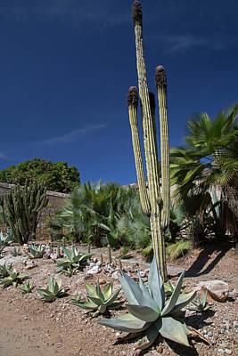 Fencepost Photograph - Oaxaca Ethnobotanical Garden by Jim West
