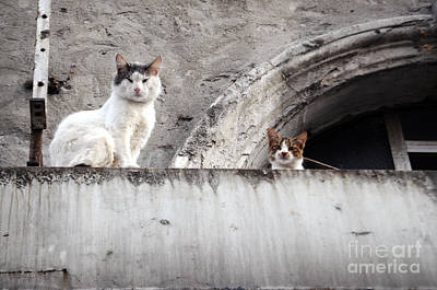Photograph - Observing Cats by Haleh Mahbod