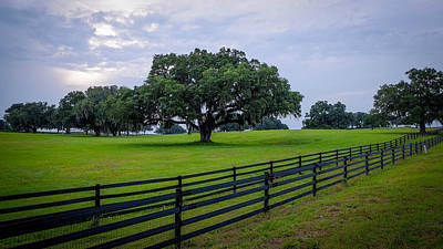 Photograph - Ocala Pasture by Louis Ferreira