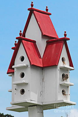 Birdhouse Photograph - Occupied by Cathy Lindsey