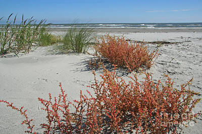 Photograph - Ocean Beach Landscape by Kevin McCarthy
