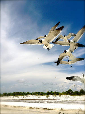Photograph - Ocean Birds by Iconic Images Art Gallery David Pucciarelli