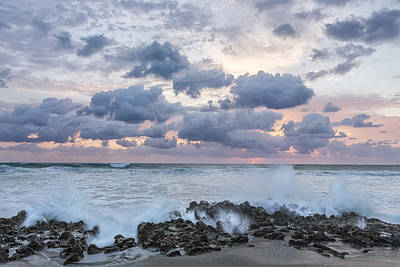 Plexiglass Photograph - Ocean Blooms by Jon Glaser