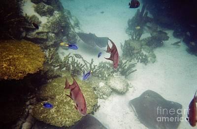 Photograph - Ocean Bottom by D Hackett