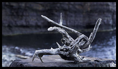 Photograph - Ocean Driftwood  by Vincent Dwyer