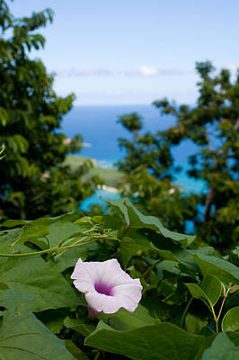 Island Photograph - Ocean Garden View by Jared Shomo