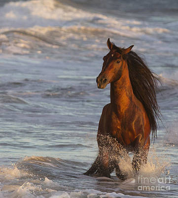 Ojai Wall Art - Photograph - Ocean Horse At Sunset by Carol Walker
