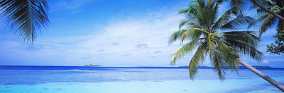 Ocean, Island, Water, Palm Trees Art Print by Panoramic Images