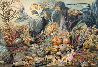 Ocean Life, 1859 Art Print by Metropolitan Museum of Art