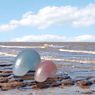 Shells Photograph - Ocean Love Affair - Nautilus Shells - Square by Gill Billington