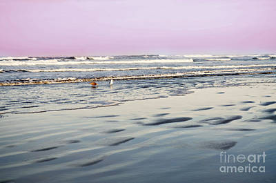 Photograph - Ocean Morning Greeters by Mindy Bench
