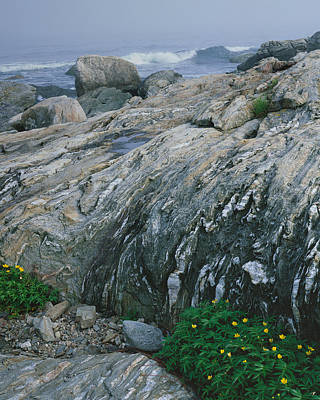 Photograph - Ocean Point Silver Weed-v by Tom Daniel