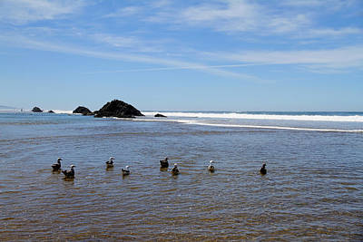 Photograph - Ocean Sea Gulls by Steve McKinzie