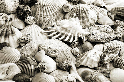 Photograph - Ocean Seashells 1 B W by Andee Design