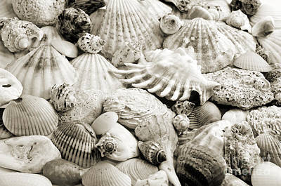 Photograph - Ocean Seashells 2 B W by Andee Design
