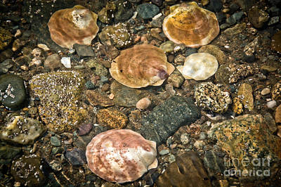 Photograph - Ocean Shells by Cheryl Baxter