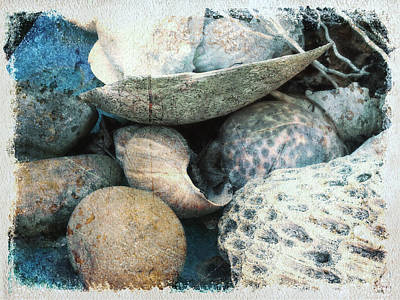 Photograph - Ocean Shells by Clarity Artists