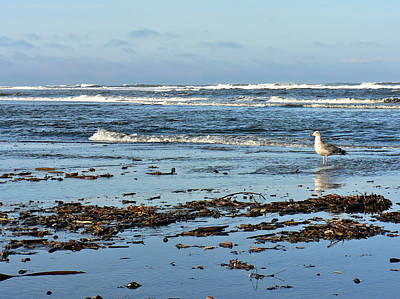 Photograph - Ocean Shores by Jean Wright