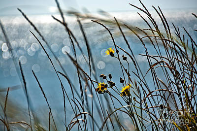 Photograph - Ocean Side Wildflowers by Cheryl Baxter