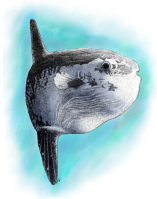 Photograph - Ocean Sunfish by Roger Hall