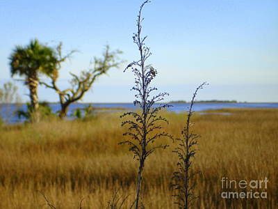 Photograph - Ocean View At The Marsh by Lew Davis