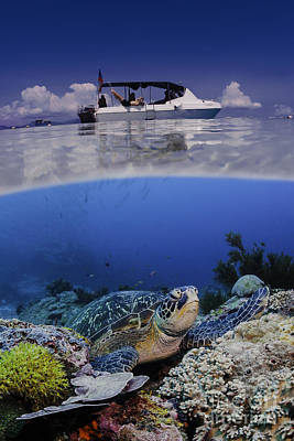 Photograph - Oceans Below by Soren Egeberg