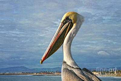 Photograph - Oceanside - Brown Pelican by Gabriele Pomykaj