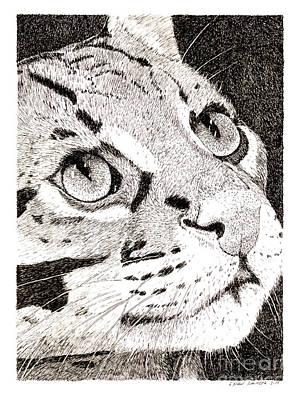 Ocelot Art Print by Paul Kmiotek