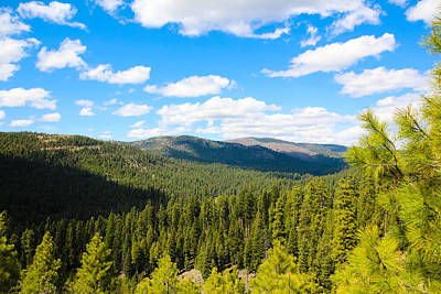Photograph - Ochoco National Forest by Christy Patino