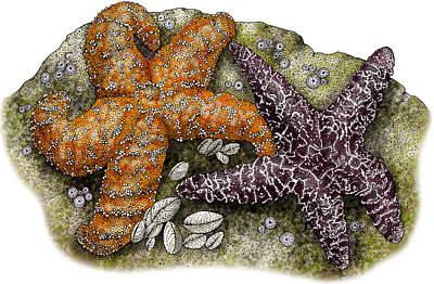 Photograph - Ochre Sea Stars by Roger Hall