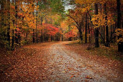 Caravaggio - Oconee National Forest Road 2 by Reid Callaway