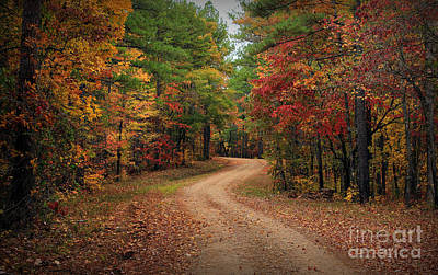 Photograph - A Drive Thru The Oconee National Forest Road 3 by Reid Callaway