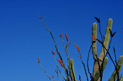 Art Print featuring the photograph Ocotillo And Saguaro by Diane Lent