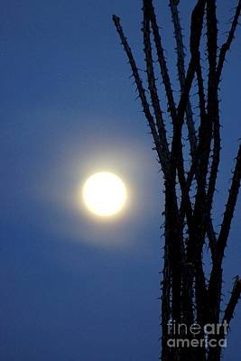 Photograph - Ocotillo Moon by Kerri Mortenson