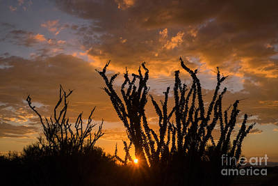 Photograph - Ocotillo Sunset by Marianne Jensen