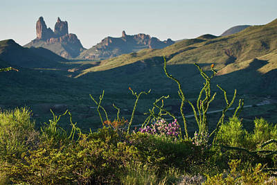 Big Bend National Park Photograph - Ocotillo(fouqurieria Splendens by Larry Ditto