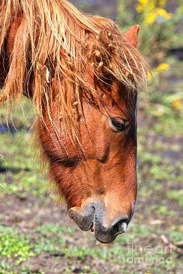 Photograph - Ocracoke Island Pony by Adam Jewell