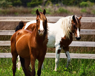 Digital Art - Ocracoke Ponies by Mary Almond