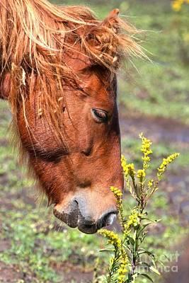 Photograph - Ocracoke Wild Pony by Adam Jewell