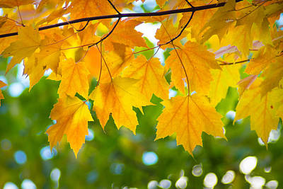 Photograph - October Canopy by Bill Pevlor