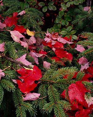 Photograph - October Christmas Colors by Tom Daniel