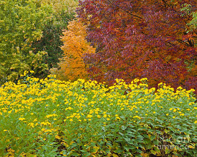 Photograph - October Color Palette by Alan L Graham