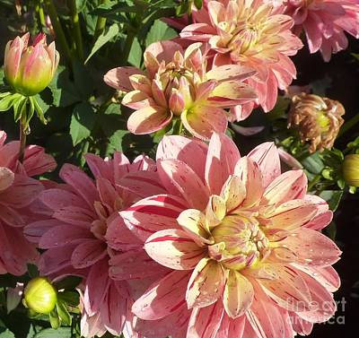 Photograph - October Dahlia Field by Susan Garren
