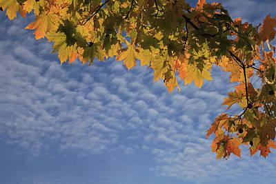 Photograph - October by Dragan Kudjerski