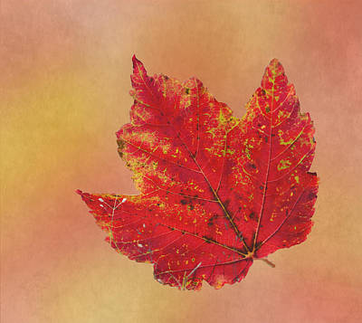 Red Leaves Photograph - October Glory by Angie Vogel